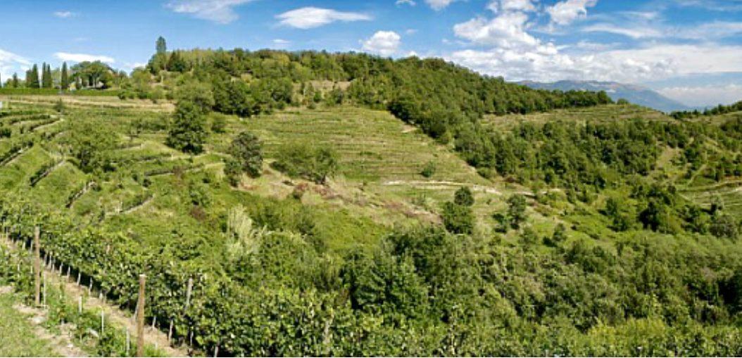 Walk and Wine nel Parco di Montevecchia