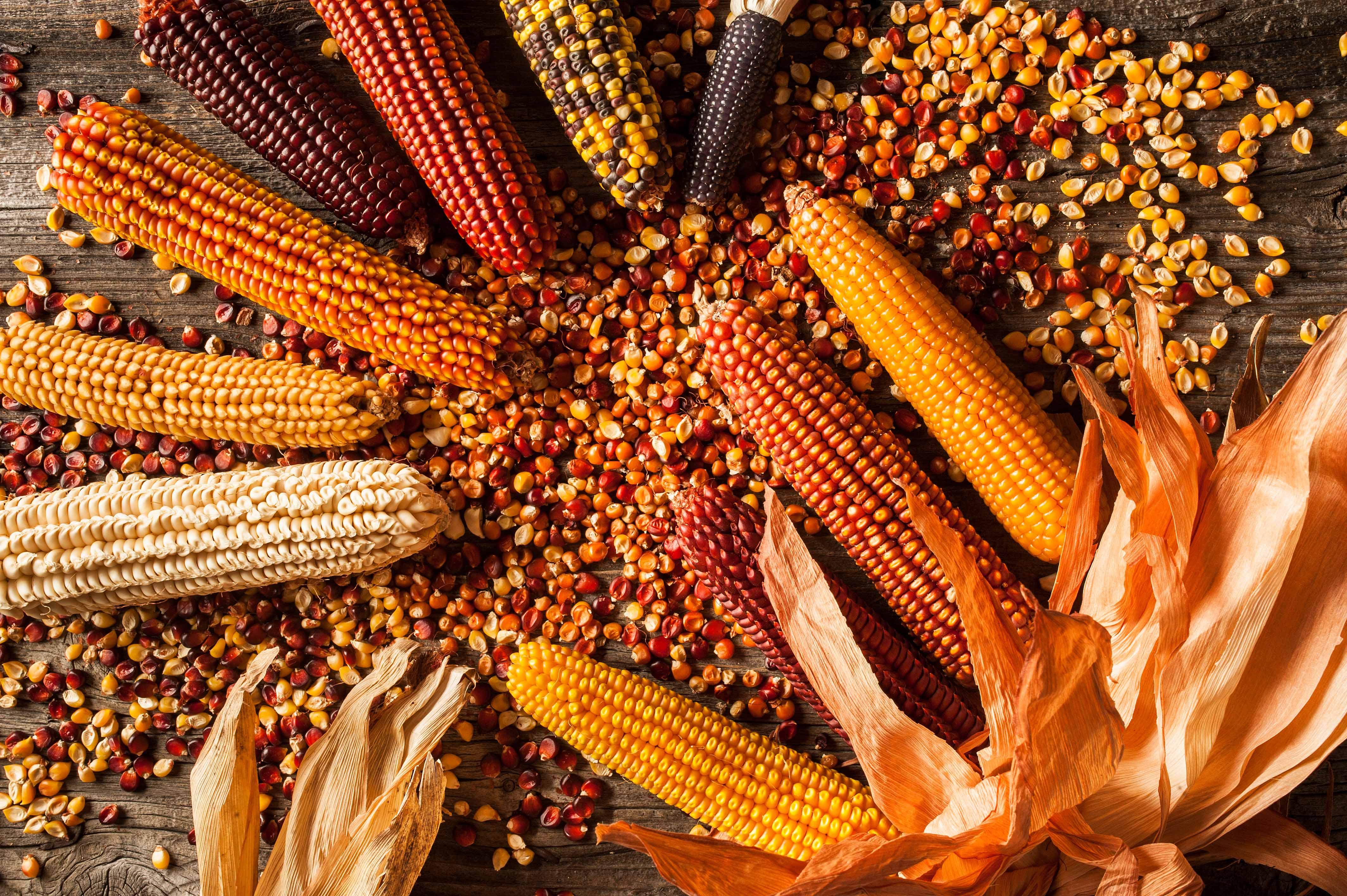 Mais delle Orobie bergamasche, un nuovo disciplinare