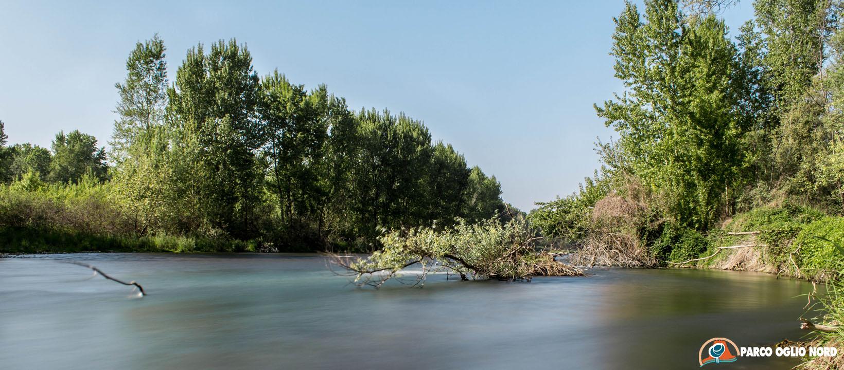Essenze di fiume al Parco Oglio Nord