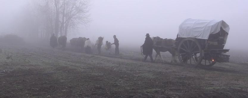 Festival del pastoralismo, transumanza da Bergamo a Gorgonzola