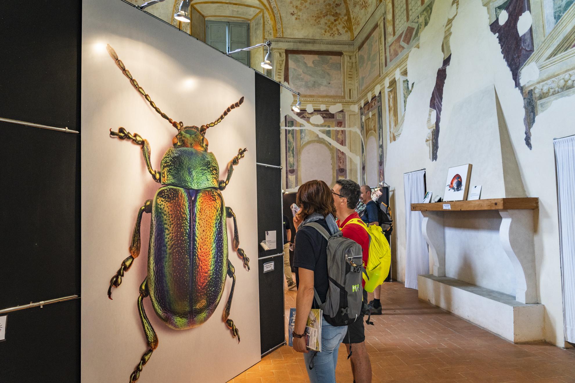 Little giants, gli insetti danno spettacolo