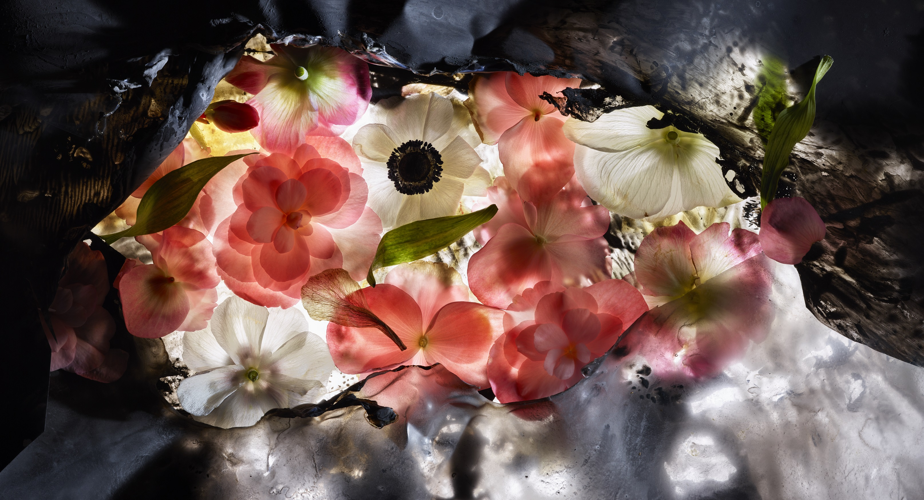Un mondo di fiori in mostra a villa Carlotta