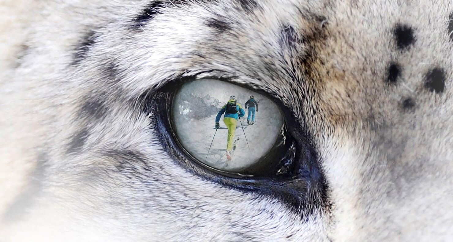 RINVIATO lo Snow Leopard Day 2020
