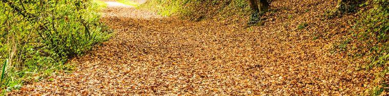 17822_autunno-lungo-ladda