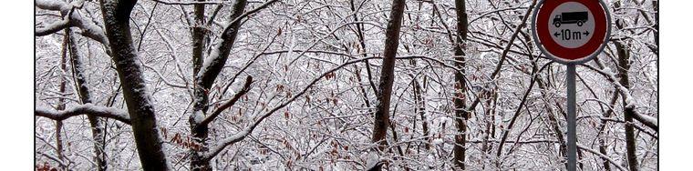 15456_merletti-di-ghiaccio-in-valmara