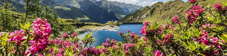 38731_alpiorobie_valgerola_lagodipescegallo_fioriture_rododendri17_0888jpg.jpg