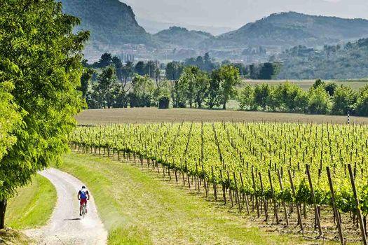 Pedalando tra le vigne in Franciacorta