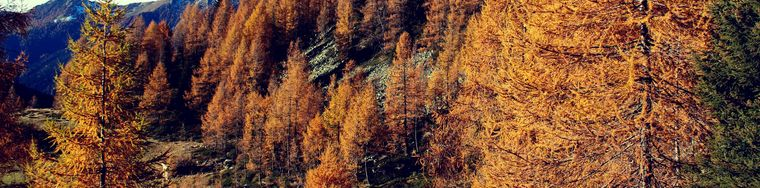 16493_autunno-nei-suoi-colori