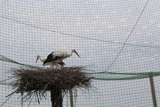 Parco del Serio: lavori alla voliera delle cicogne