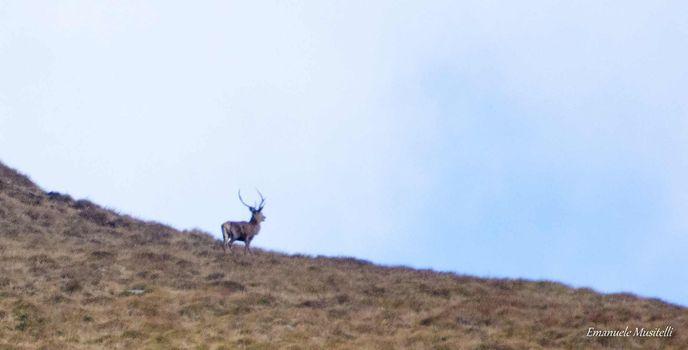 Ascolando il bramito dei cervi e le altre escursioni del weekend