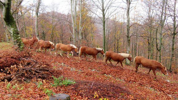 Un calendario per aiutare i cavalli del Bisbino