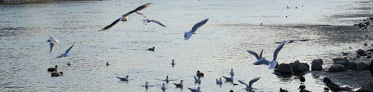 32410_001-_-brivio-il-suo-fiume-_-copiajpg.jpg