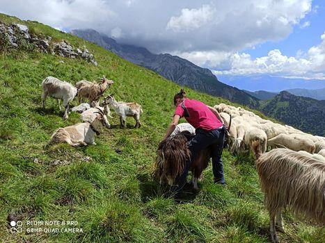 Pasturs, i giovani tornano in montagna