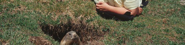 10545_il-risveglio-delle-marmotte