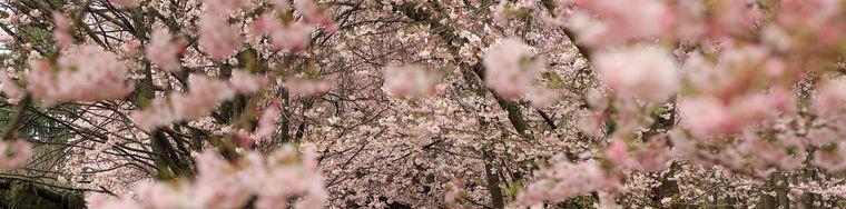 32511____-gli-occhi-della-primavera-_li-vedi-in-alto-a-destra-della-foto_-_-copiajpg.jpg