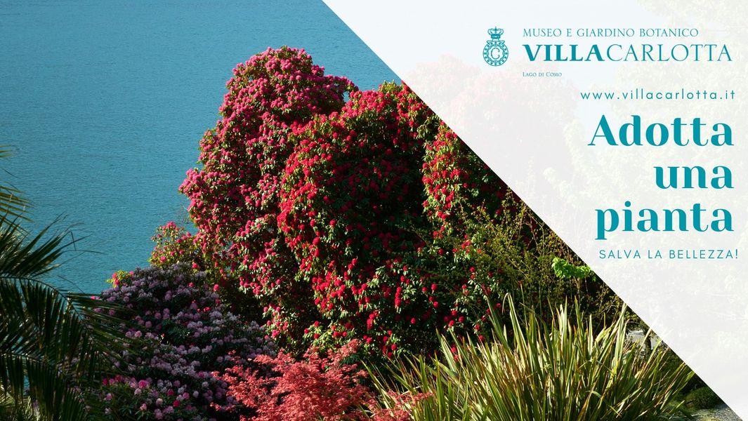 Adotta una pianta di Villa Carlotta