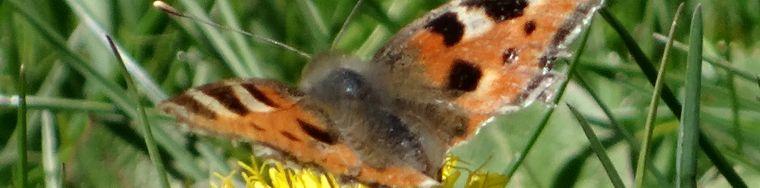 14120_farfalle-in-presolana