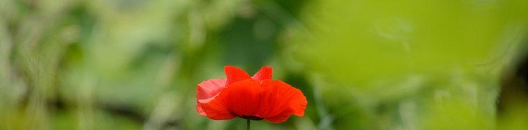 15887_fioridi-stagione