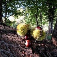 Proprio una bella giornata di sole per raccoliere uno dei doni più gustosi dell'autunno. Ciao.