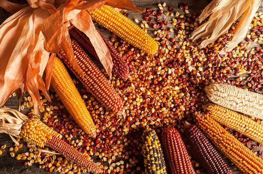 DeCibo. Storia e segreti del mais e delle farine