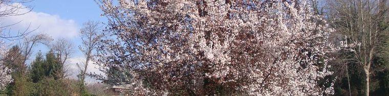 13749_prima-di-primavera