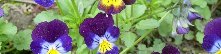 10131_colori-di-primavera