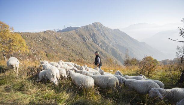 Ascolta la poesia dell'ultimo pastore del Cornizzolo