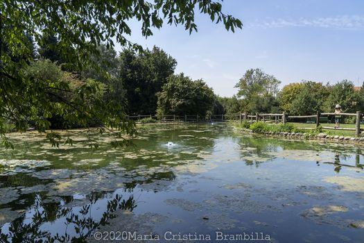 A Seveso, nel Parco Bosco delle querce