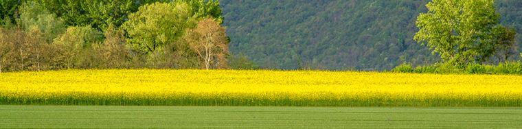 17291_giallo-verde-e-un-po-di-rosso