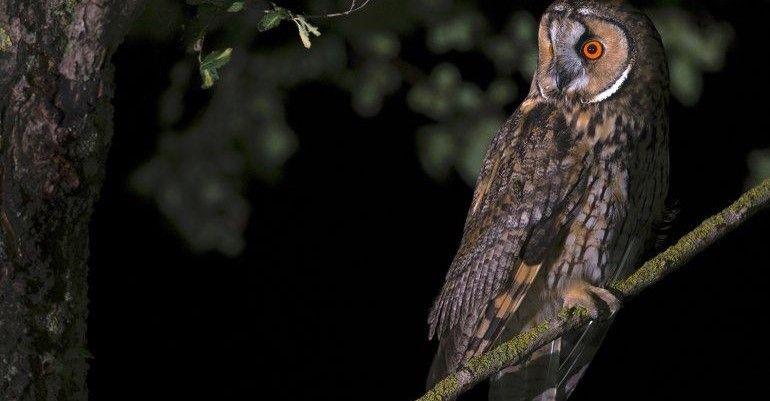 Di notte alla scoperta dei suoni dei rapaci