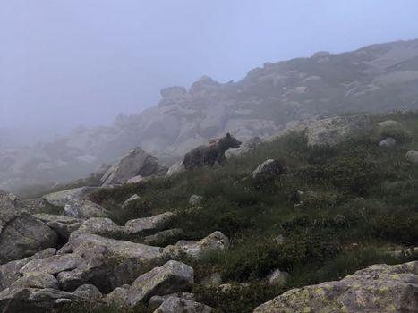 Orso avvistato in Adamello