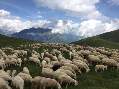 Pasturs, sarà un'edizione particolare