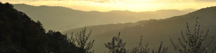 11761_raccolta-olive-liguri