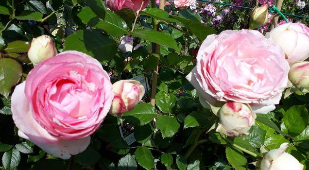 Franciacorta in fiore. La vita torni a sbocciare