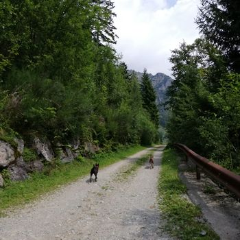 Dog Trail in Val d'Inferno