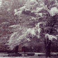 In verità ho voluto ricreare la scarsa qualità della foto per rendere veritiera la tempesta di neve ke era in atto