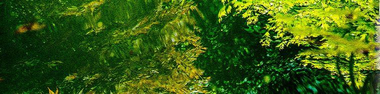 17613_nei-giardini-di-villa-melzi
