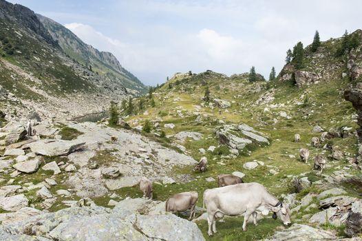 Segni e sogni d'alpe in mostra ad Averara