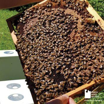 Alla scoperta del mondo delle api