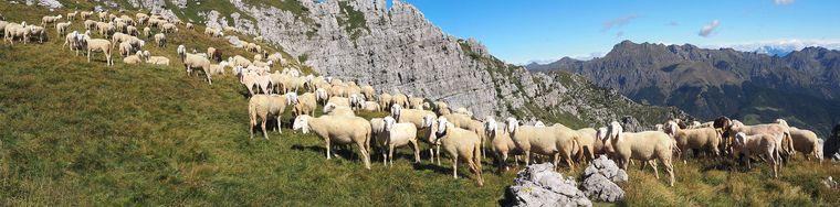 39033_panoramica_pecore-campellijpg.jpg