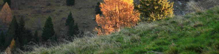 16603_mite-autunno-attorno-al-timogno