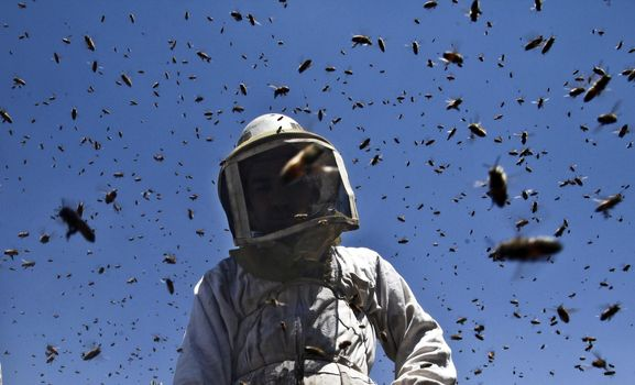 A Minoprio corso gratuito per apicoltori